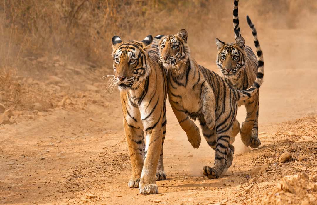 Rajasthan Wildlife Safari